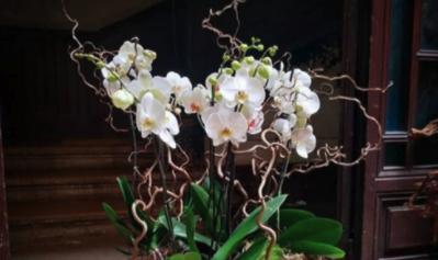 ouverture fleuriste avignon