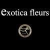 EXOTICA FLEURS